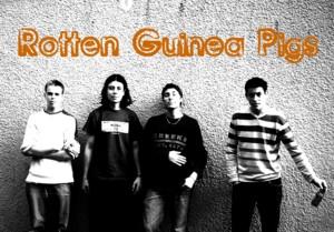 Rotten Guinea Pigs
